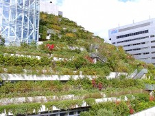 Zelené terasy v Japonsku