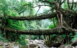 Umshiang Double-Decker Root Bridge