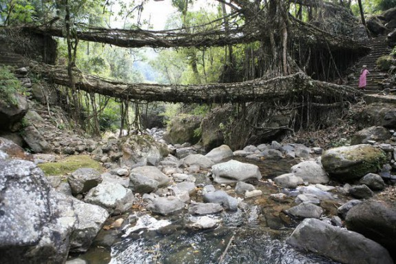Umshiang Double-Decker Root Bridge_3