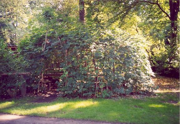 Živé stavby sa hodí hlavne pre najrôznejšie záhradné prvky, ako sú altánky či krytá ohnisko (Foto: autorka)