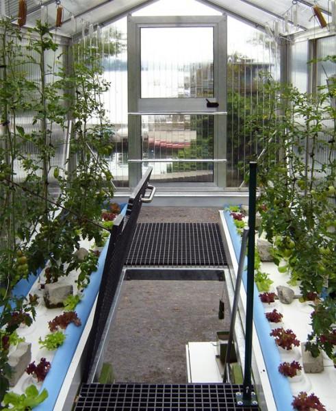 Prenosný skleník (5)