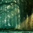 The sun light of Forest