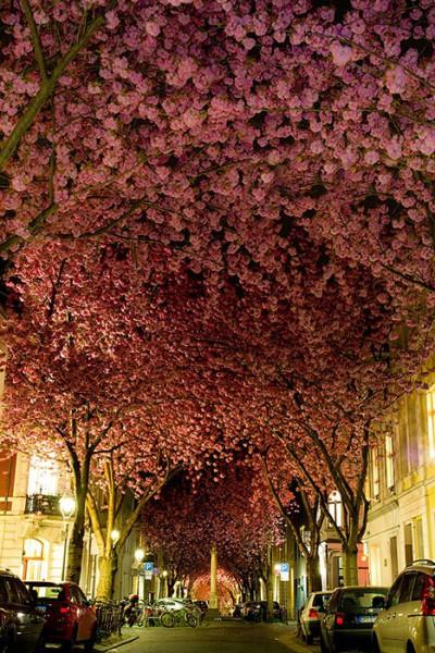 Bonn, Nemecko