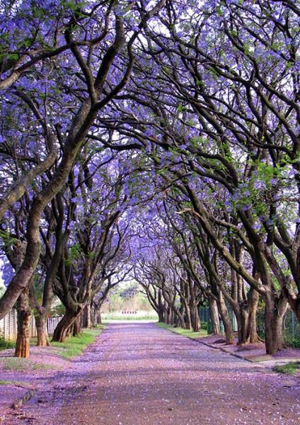 Cullinan, Južná Afrika