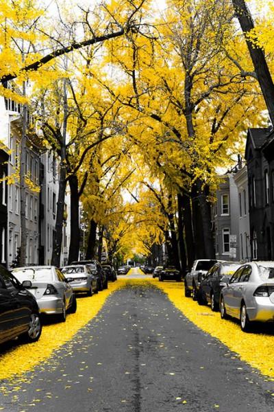 Washington, USA